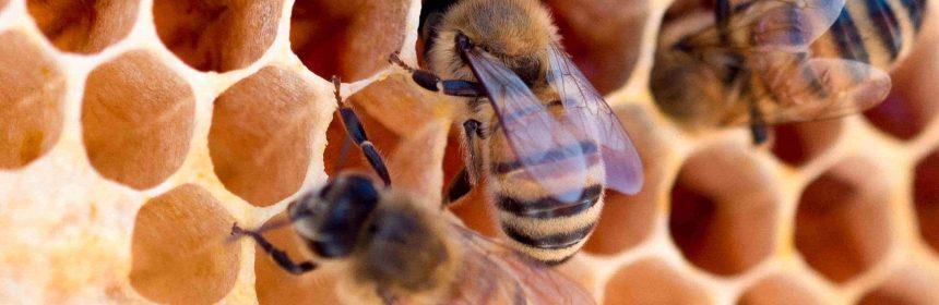 Koninginnegelei kopen in de honingwinkel